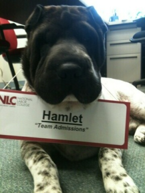 Photo of Hamlet the Dog with a name tag reading Hamlet: Team Admissions""